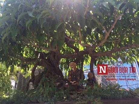 Gap nguoi thoi hon dieu khac da vao nghe thuat bonsai tai Da Nang - Anh 13