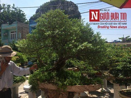 Gap nguoi thoi hon dieu khac da vao nghe thuat bonsai tai Da Nang - Anh 6