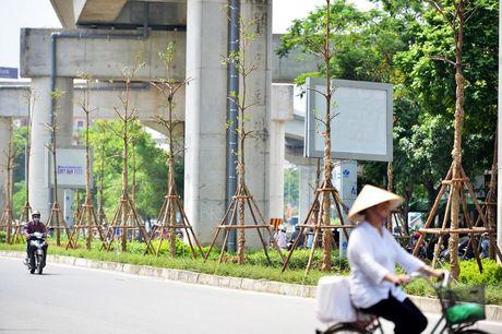 Trong cay xanh duoi duong sat tren cao: Khong che chieu cao se tao mang xanh cho do thi - Anh 1