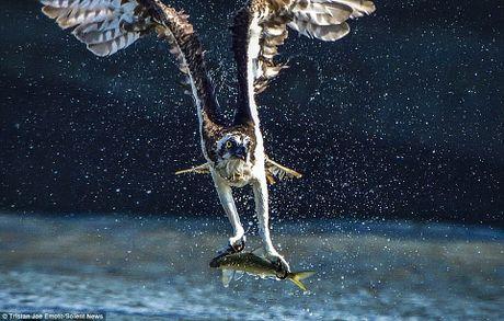 Khoanh khac tuyet dep khi chim ung vo moi tren mat song - Anh 4