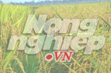 Dong Nai: Nong nghiep tang truong 3,2% - Anh 1