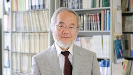 Nha khoa hoc Nhat Ban gianh Giai Nobel Y hoc 2016 - Anh 1