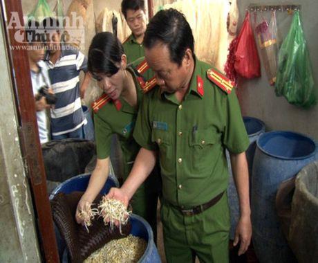 Thua Thien- Hue: Tieu huy hon 2 tan gia do u hoa chat - Anh 1