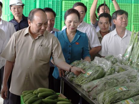 Thu tuong tham du an nong nghiep cong nghe cao VinEco Hai Phong - Anh 1