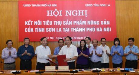 TP Ha Noi va tinh Son La ket noi tieu thu san pham nong san - Anh 1