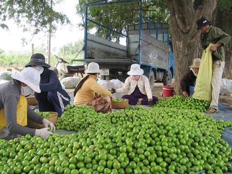 Ninh Thuan dan nhan de bao ho trai tao - Anh 1