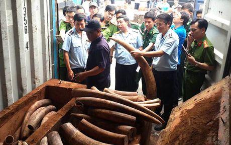 Hon 2 tan nga voi duoc nguy trang tinh vi trong ruot go Chau Phi - Anh 1