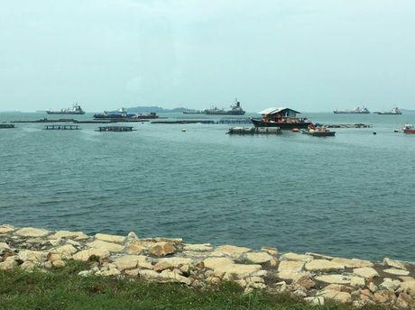 Ngo ngang voi dao chon rac Semakau cua Singapore - Anh 2