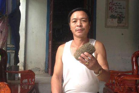 Luong y xu Thanh: Soi trau bo con tot hon 'cat lon' - Anh 1