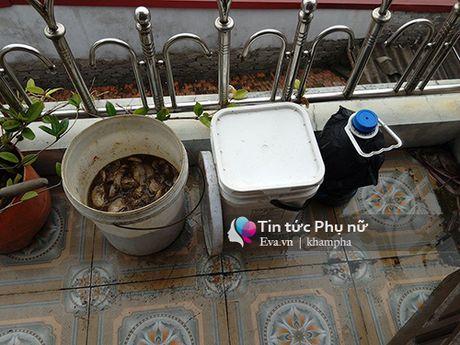 Hoc cach u phan ca tai nha thanh thuoc kich phot cho rau sach len vun vut - Anh 3