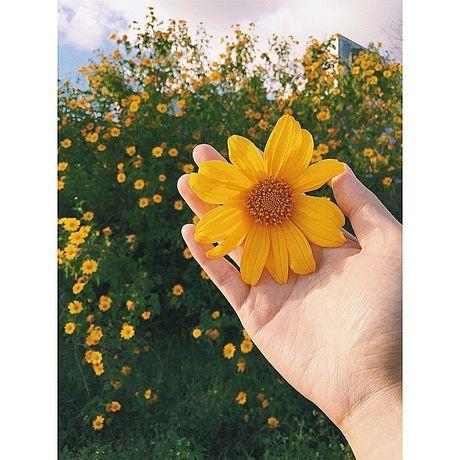 Chiem nguong cung duong hoa da quy dep nao long o Da Lat - Anh 2