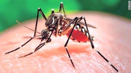 WHO canh bao virus Zika se lan rong tai chau A-Thai Binh Duong - Anh 1