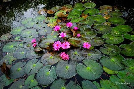 Nhung diem ngam hoa sung dep ngan ngo cho dan phuot - Anh 1
