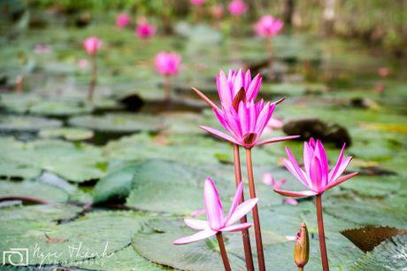 Nhung diem ngam hoa sung dep ngan ngo cho dan phuot - Anh 4