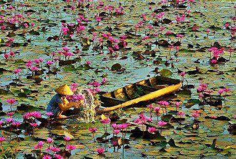 Nhung diem ngam hoa sung dep ngan ngo cho dan phuot - Anh 6