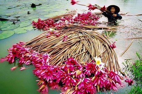 Nhung diem ngam hoa sung dep ngan ngo cho dan phuot - Anh 7