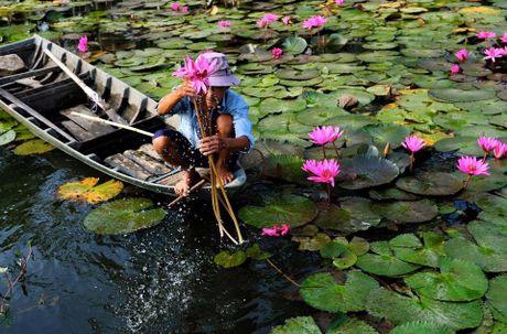 Nhung diem ngam hoa sung dep ngan ngo cho dan phuot - Anh 9
