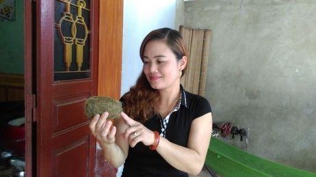 Phu Tho: Tuong 'u lon' lai hoa 'cat lon tien ty' - Anh 1