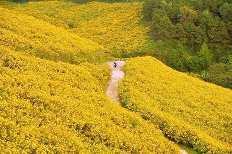 Anh hoa da quy Thai Lan bi nham la o Da Lat - Anh 1