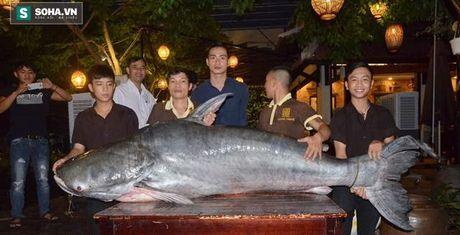 Ca tra nang 200kg duoc nha hang o Da Nang mua voi gia 400 trieu - Anh 1