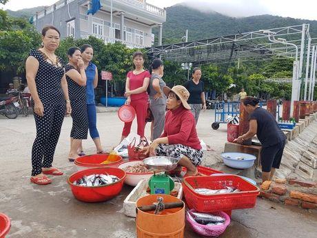 Ra Cu Lao Cham thuong thuc hai san tuoi song - Anh 1