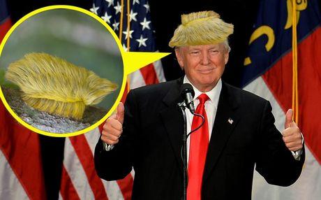 Can canh loai sau buom co ve ngoai giong mai toc cua Donald Trump - Anh 2