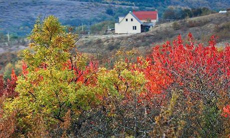 Canh sac troi thu dep hut hon o Crimea - Anh 5