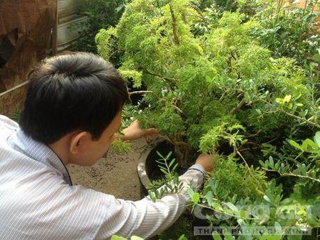 Phu Yen: Nguoi dan dua nhau thu mua dinh lang ban sang Trung Quoc - Anh 2