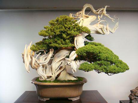 Nghe thuat tuyet dep cua nhung cay bonsai - Anh 2