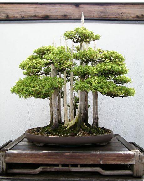 Nghe thuat tuyet dep cua nhung cay bonsai - Anh 6
