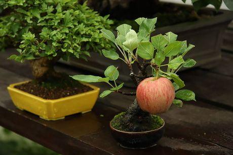 Nghe thuat tuyet dep cua nhung cay bonsai - Anh 9