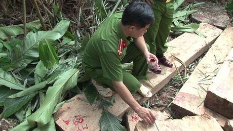 Cong an vay bat nhom lam tac pha rung, thu giu gan 100 m3 go lau - Anh 2