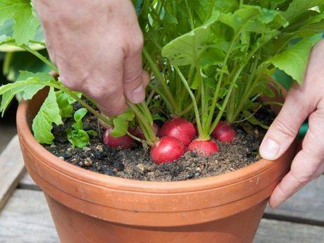 Nhung cay trong o cua so cho rau qua sach - Anh 10