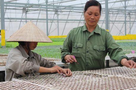 Tan muc cong nghe trong rau sach trong nha kinh lon nhat Viet Nam - Anh 3