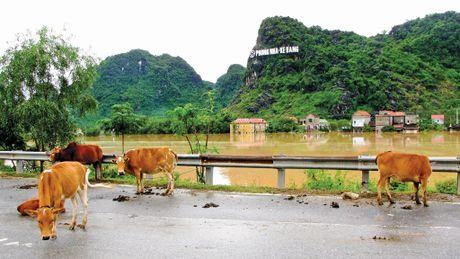 Lu du do ve, Quang Binh giua menh mong bien nuoc - Anh 8