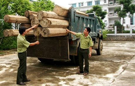 Cha lam Truong, con lam Pho o Binh Dinh: Lai dung qui trinh - Anh 1