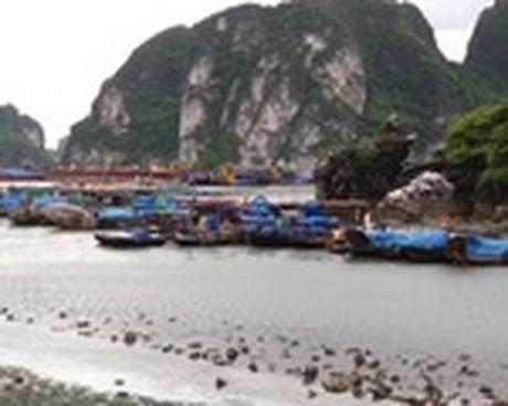 Bao so 7: 45 gio nua Sarika se do bo vao Quang Ninh - Anh 1