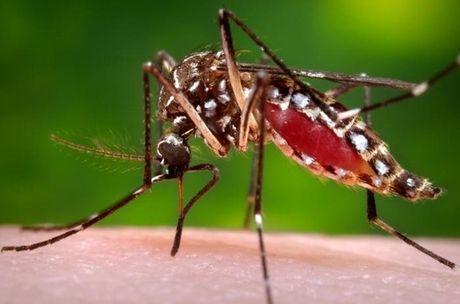 Phat hien muoi van mang virus Zika tai Viet Nam - Anh 1