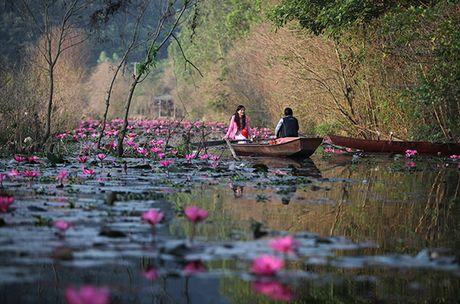 Hoa sung dep me hon tren dong suoi Yen - Anh 4