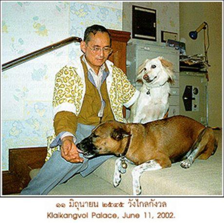 Khong chi la bieu tuong cua dao duc va tri tue, Quoc vuong Thai Lan con noi tieng boi tinh yeu danh cho dong vat - Anh 2