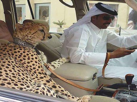 Nhung dieu ky thu chi co o thanh pho Dubai - Anh 12