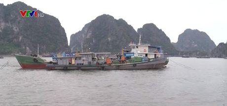 Quang Ninh ban phao hieu goi tau thuyen tranh bao so 7 - Anh 1