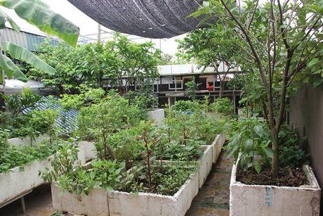 Mẹ phố 'đầu tư' mấy chục nghìn mà có vườn rau sạch trên sân thượng cho cả gia đình